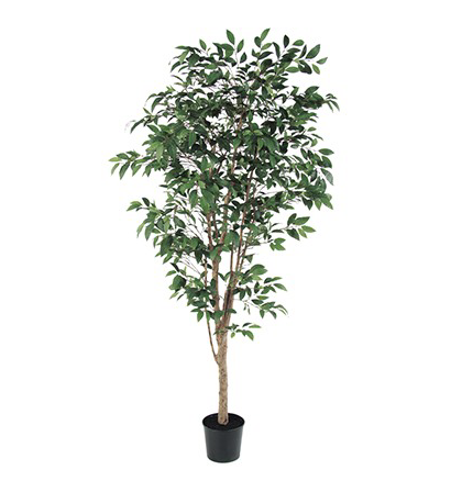 A-50774 ファイカスツリー